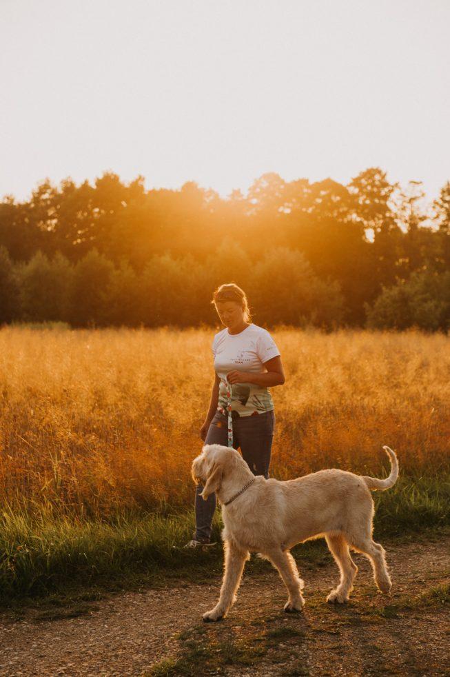 pies na spacerze o zachodzie słońca